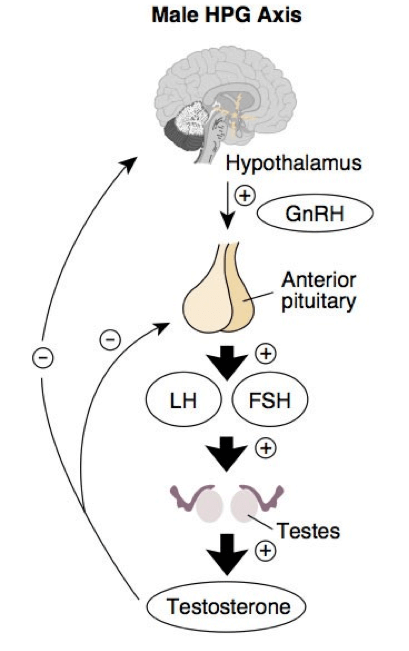 hpg-axis